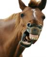 horse-289x300
